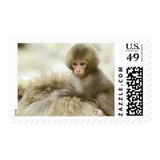 Asia, Japan, Nagano, Jigokudani, Snow Monkey 3 Stamp