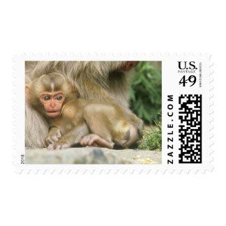 Asia, Japan, Nagano, Jigokudani, Snow Monkey 4 Stamp