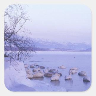 Asia, Japón, Hokkaido, Akan NP, cisnes del Whopper Pegatina Cuadrada