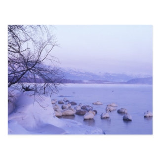 Asia, Japón, Hokkaido, Akan NP, cisnes del Whopper Postales