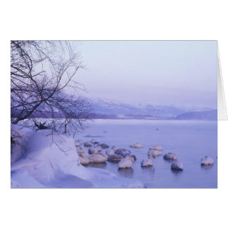 Asia, Japón, Hokkaido, Akan NP, cisnes del Whopper Tarjeta De Felicitación