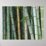 Asia, Japón, Kyoto, Arashiyama, Sagano, bambú Impresiones