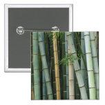 Asia, Japón, Kyoto, Arashiyama, Sagano, bambú Pins