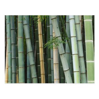 Asia, Japón, Kyoto, Arashiyama, Sagano, bambú Tarjetas Postales