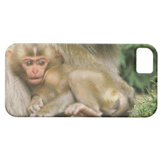 Asia, Japón, Nagano, Jigokudani, mono 4 de la iPhone 5 Case-Mate Carcasas