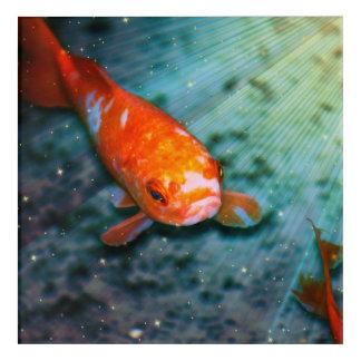 Asia Koi Fish Acrylic Print