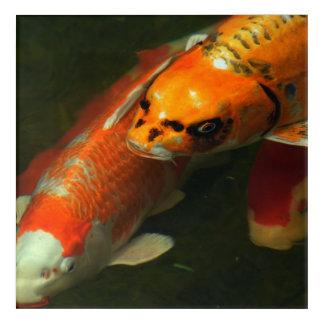 Asia Koi Fish Acrylic Wall Art
