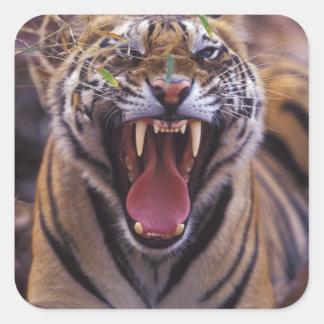 Asia la India parque nacional de Bandhavagarth Pegatinas