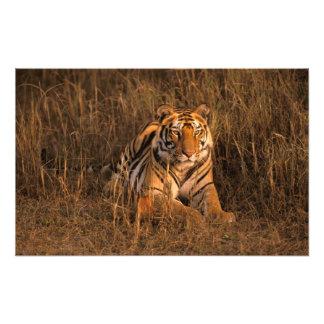 Asia, la India, parque nacional de Bandhavgarh. Ti Fotografía