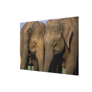 Asia, la India, parque nacional de Nargahole. Indi Impresiones En Lienzo Estiradas