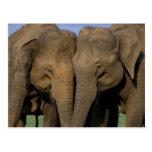 Asia, la India, parque nacional de Nargahole. Indi Postal