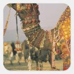 Asia, la India, Pushkar. Camello Shamu, Pushkar Colcomania Cuadrada