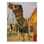 Asia, la India, Pushkar. Camello Shamu, Pushkar Tarjeta Postal