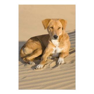 Asia la India Rajasthán Jaisalmer Thar Fotografias