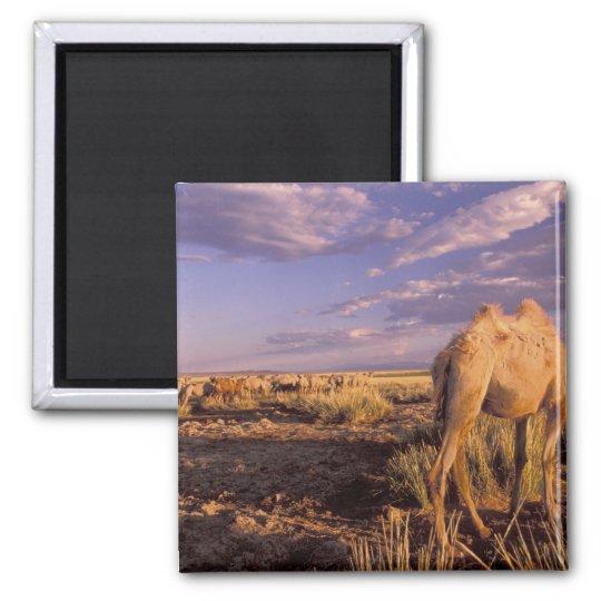 Asia, Mongolia, Gobi Desert, Great Gobi 2 Inch Square Magnet