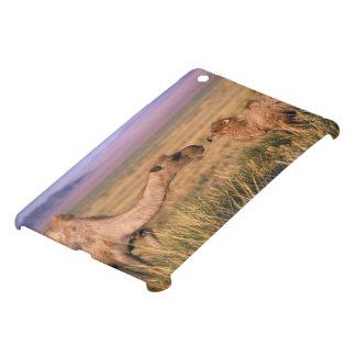 Asia, Mongolia, Gobi Desert, Great Gobi iPad Mini Case
