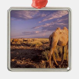 Asia, Mongolia, Gobi Desert, Great Gobi Metal Ornament