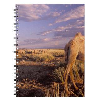 Asia, Mongolia, Gobi Desert, Great Gobi Notebook