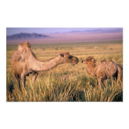 Asia, Mongolia, Gobi Desert, Great Gobi Photo Print