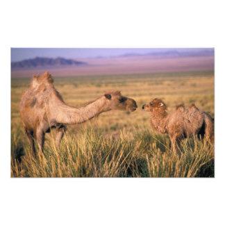 Asia, Mongolia, Gobi Desert, Great Gobi Photo Art