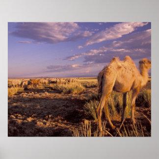 Asia, Mongolia, Gobi Desert, Great Gobi Posters