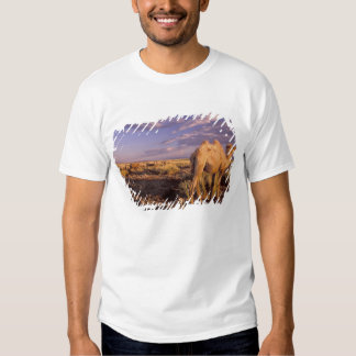 Asia, Mongolia, Gobi Desert, Great Gobi T-shirt