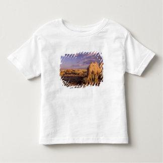 Asia, Mongolia, Gobi Desert, Great Gobi T Shirts
