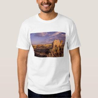 Asia, Mongolia, Gobi Desert, Great Gobi T-shirts