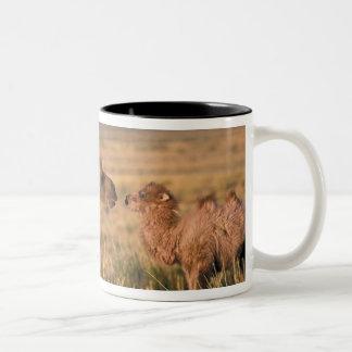 Asia, Mongolia, Gobi Desert, Great Gobi Two-Tone Coffee Mug