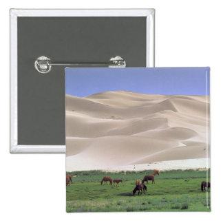 Asia, Mongolia, Gobi Desert. Wild horses. Button