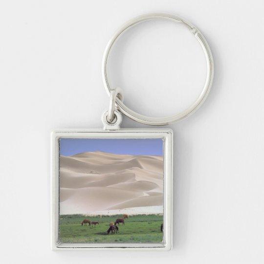 Asia, Mongolia, Gobi Desert. Wild horses. Keychain