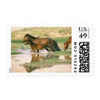 Asia, Mongolia, Gobi Desert. Wild horses. Postage