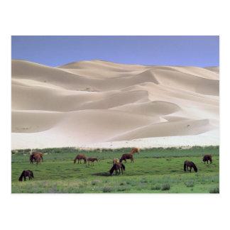 Asia, Mongolia, Gobi Desert. Wild horses. Post Card