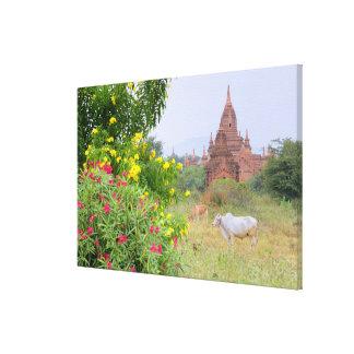 Asia, Myanmar (Birmania), Bagan (Pagan). Vacas Impresiones De Lienzo