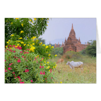 Asia, Myanmar (Birmania), Bagan (Pagan). Vacas Tarjeta De Felicitación