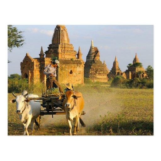 Asia, Myanmar (Burma), Bagan (Pagan). A cart is Post Card