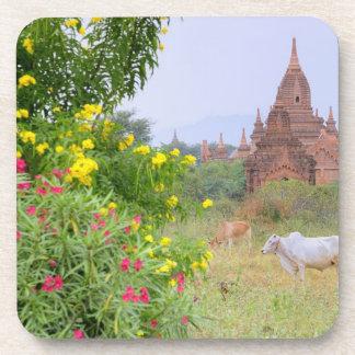 Asia, Myanmar (Burma), Bagan (Pagan). Cows Beverage Coaster