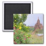 Asia, Myanmar (Burma), Bagan (Pagan). Cows Fridge Magnets