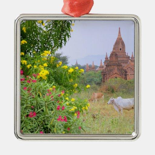 Asia, Myanmar (Burma), Bagan (Pagan). Cows Christmas Tree Ornaments