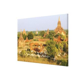 Asia, Myanmar (Burma), Bagan (Pagan). Cows pass Stretched Canvas Prints