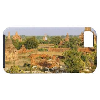 Asia, Myanmar (Burma), Bagan (Pagan). Cows pass iPhone 5 Covers