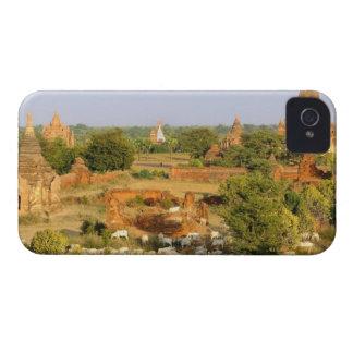 Asia, Myanmar (Burma), Bagan (Pagan). Cows pass iPhone 4 Case-Mate Case