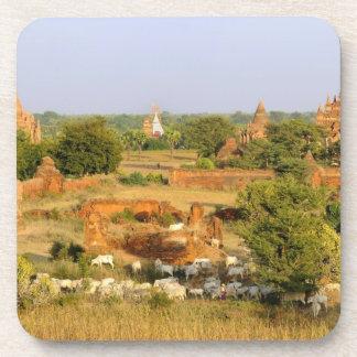 Asia, Myanmar (Burma), Bagan (Pagan). Cows pass Beverage Coaster