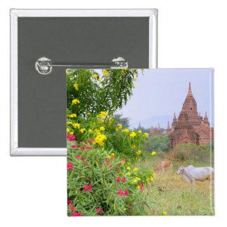 Asia, Myanmar (Burma), Bagan (Pagan). Cows Pinback Button