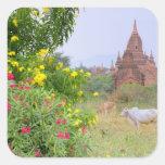 Asia, Myanmar (Burma), Bagan (Pagan). Cows Sticker