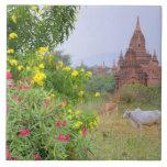 Asia, Myanmar (Burma), Bagan (Pagan). Cows Tile