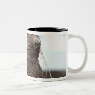 Asia, Russia, Russian Far East, Kamchatkan Two-Tone Coffee Mug