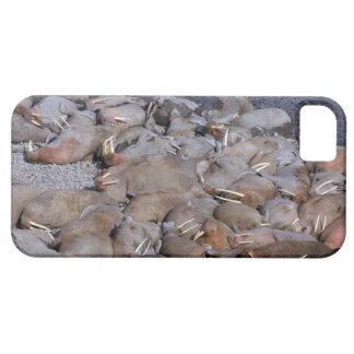 Asia, Russia, Siberian Arctic, Bering Sea, iPhone SE/5/5s Case