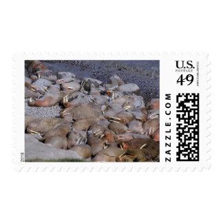 Asia, Russia, Siberian Arctic, Bering Sea, Stamp
