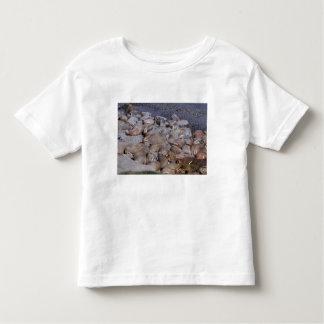 Asia, Russia, Siberian Arctic, Bering Sea, Toddler T-shirt